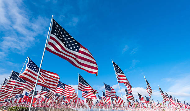 Field of American Flags stock photo