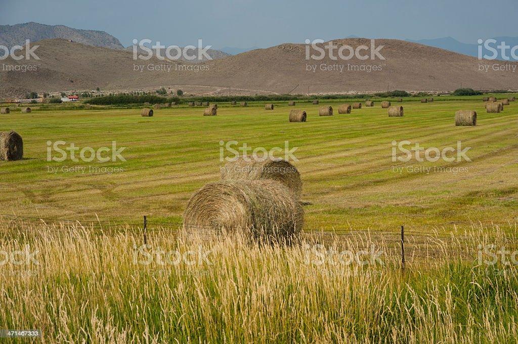 Field of Baled Hay stock photo