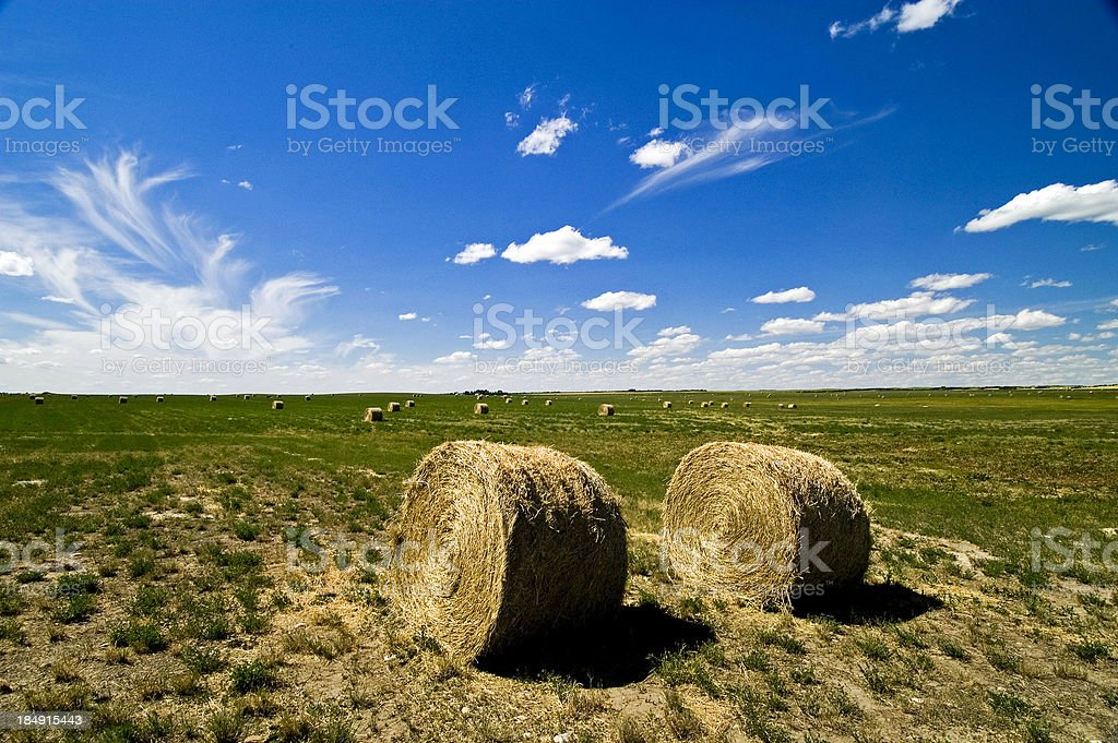 Field of Bales royalty-free stock photo