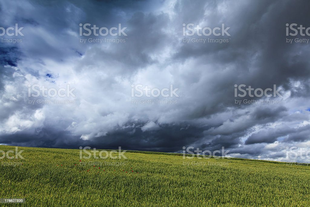 Field of barley and dramatic storm sky royalty-free stock photo