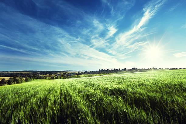 field von Gerste in Sonnenuntergang Zeit – Foto