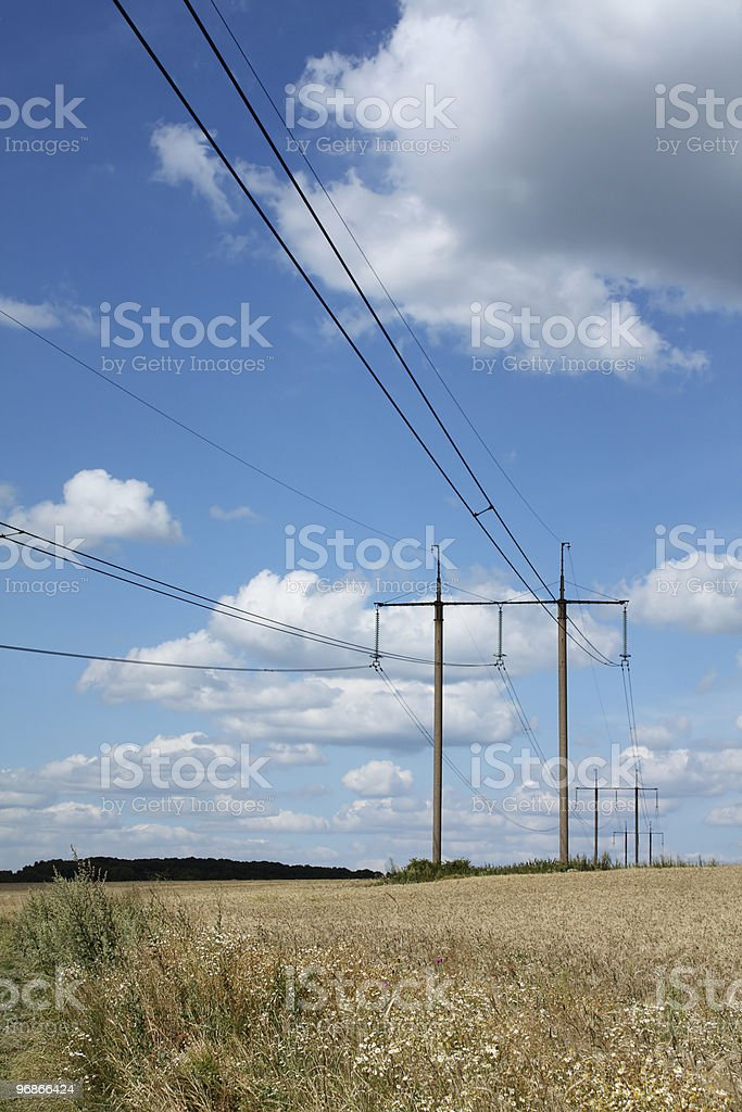 Field of barley with pylons royalty-free stock photo