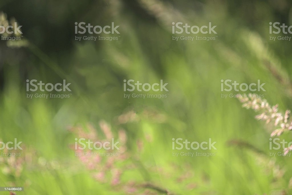 Field of Blooming Grasses Abstract Effect royalty-free stock photo