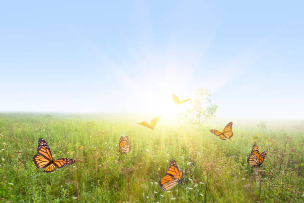 Field of butterflies picture id1213089774?b=1&k=6&m=1213089774&s=612x612&w=0&h=l8gewzh5p2lxffjwcwtlvwcjhzk3q0cqqofoyer1z44=