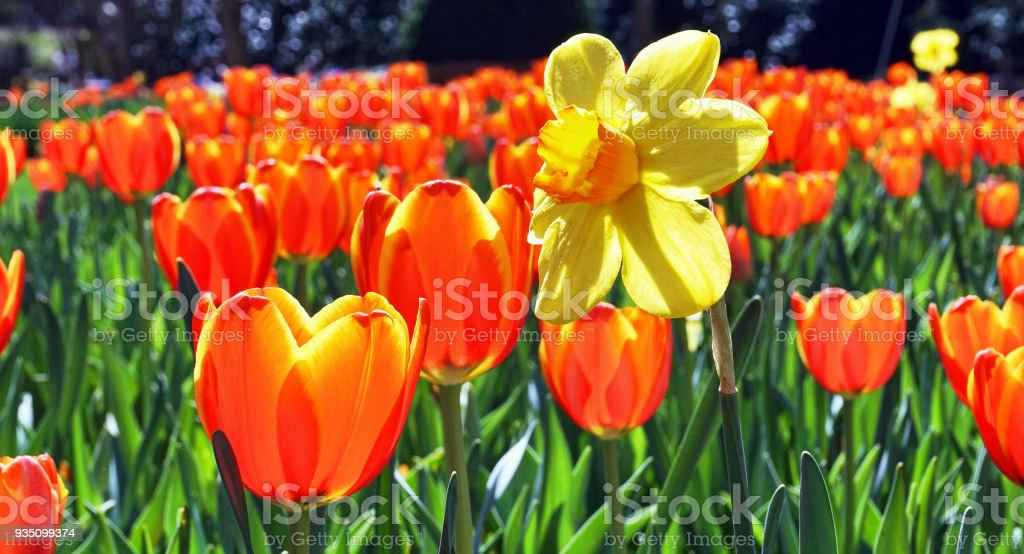 A Field of Color. stock photo