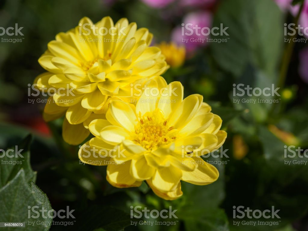 Field Of Colorful Flowers In Spring Stock Photo More Pictures Of