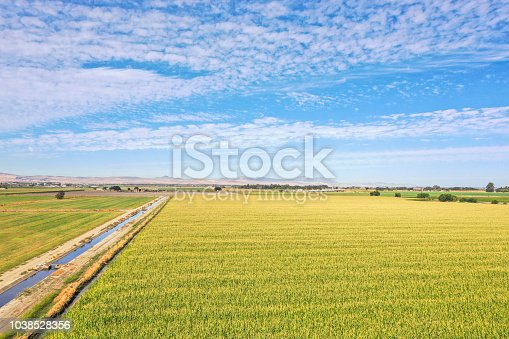 Aerial view of field of corn in the heartland of California.