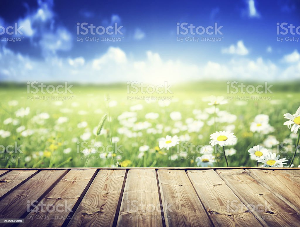 field of daisy flowers and wood floor stock photo