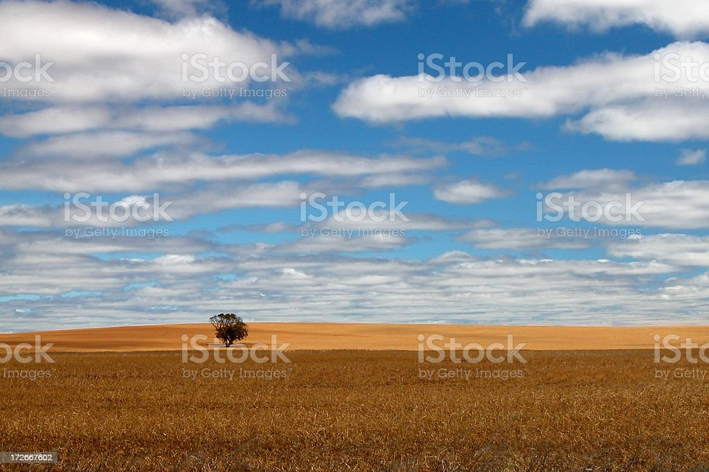 Field of Dreams royalty-free stock photo