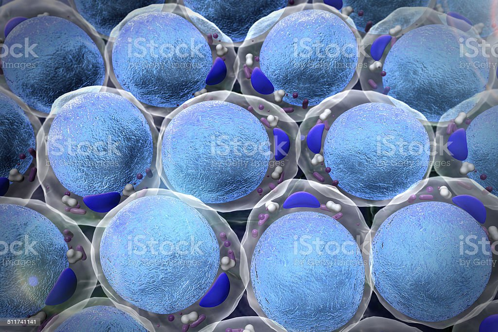 field of  fat cells stock photo