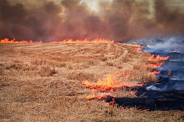 Field of Fire – Foto