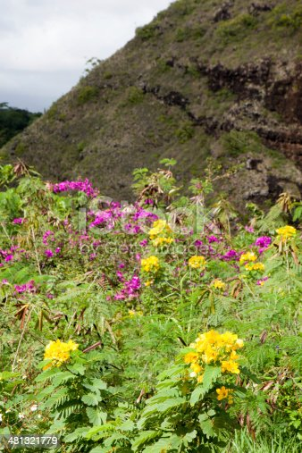 A field of flowers grows at the bottom of a mountainside in Kauai, Hawaiil  rr