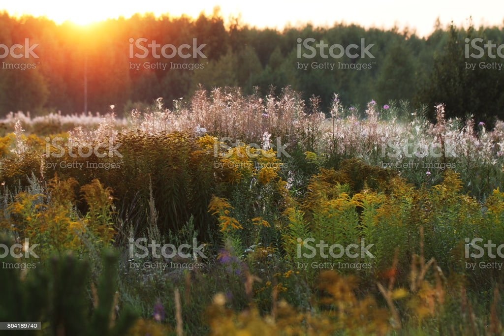 field of flowers in morning fog. Outdoor lanscape photo royalty-free stock photo