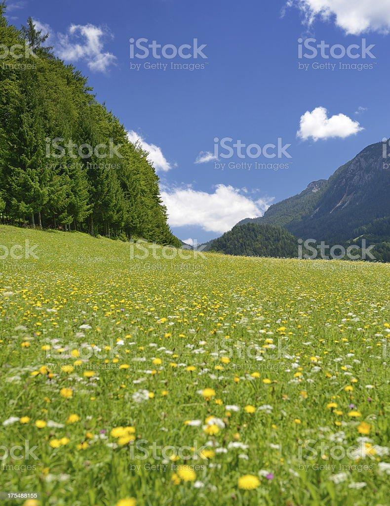 Field of Flowers (XXXL) royalty-free stock photo