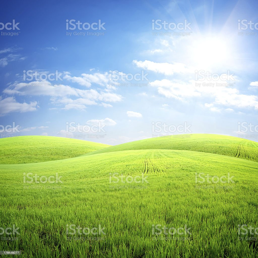 Field of fresh grass stock photo