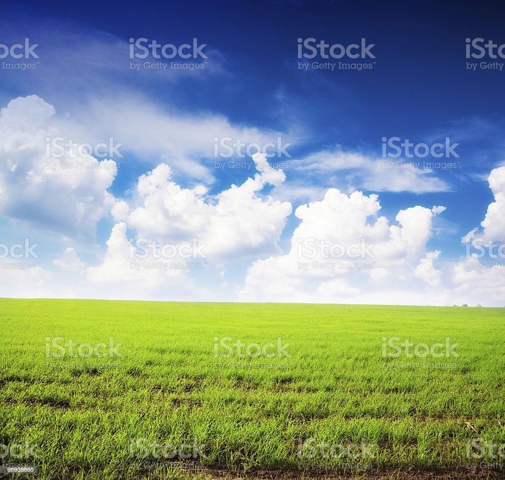 Field of fresh summer grass and clouds royalty-free stock photo