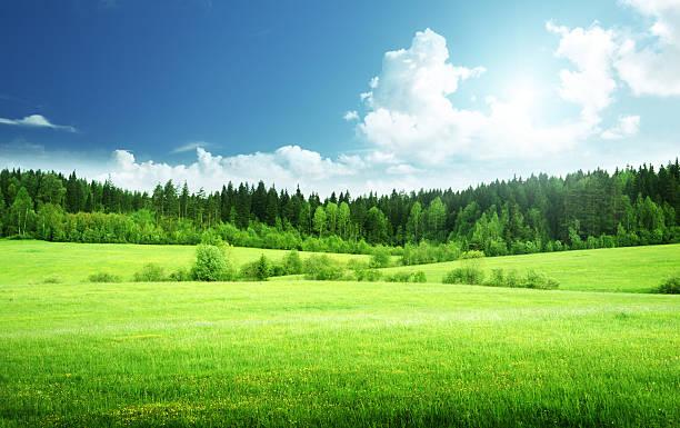Feld von Gras und perfekte Himmel – Foto