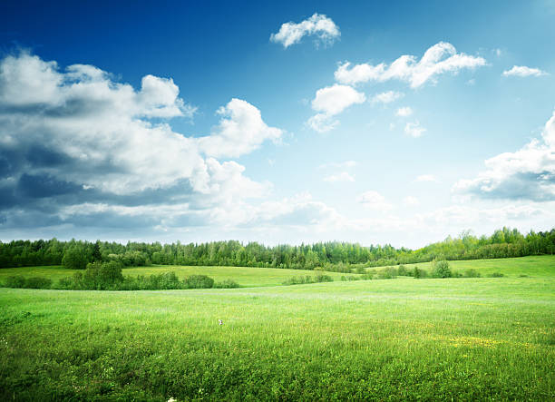 field of grass and perfect sky - field stock photos and pictures