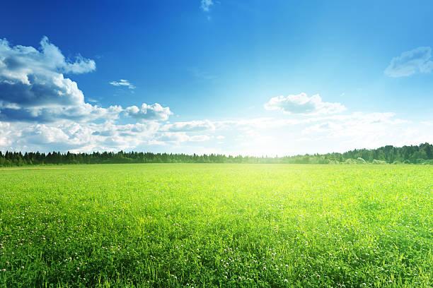 フィールドの芝生と完璧な空 ストックフォト