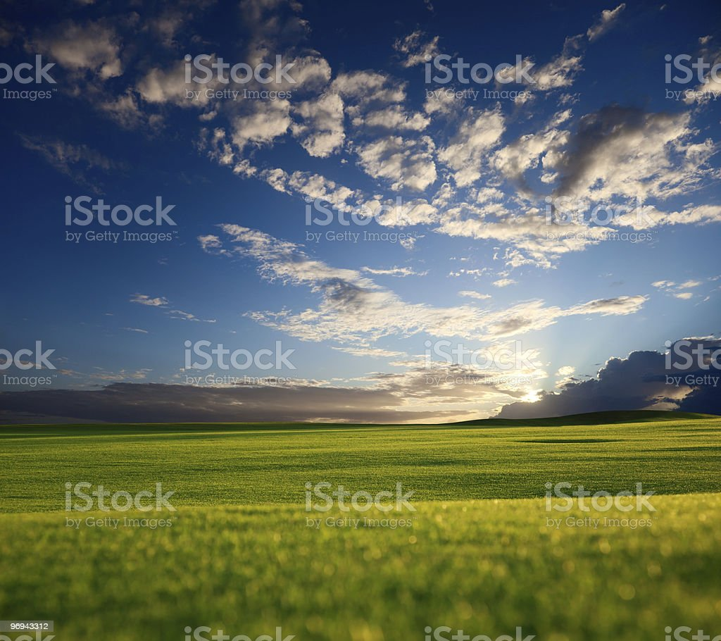 field of grass and sunset royalty-free stock photo