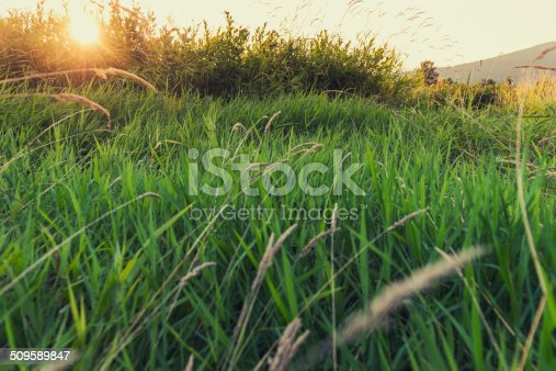 sun sets, peaceful field / nothing to complain about / when so idyllic