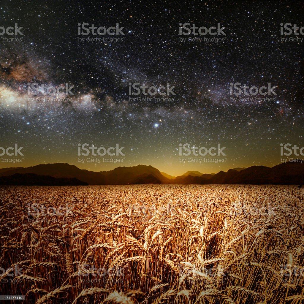 field of grass stock photo
