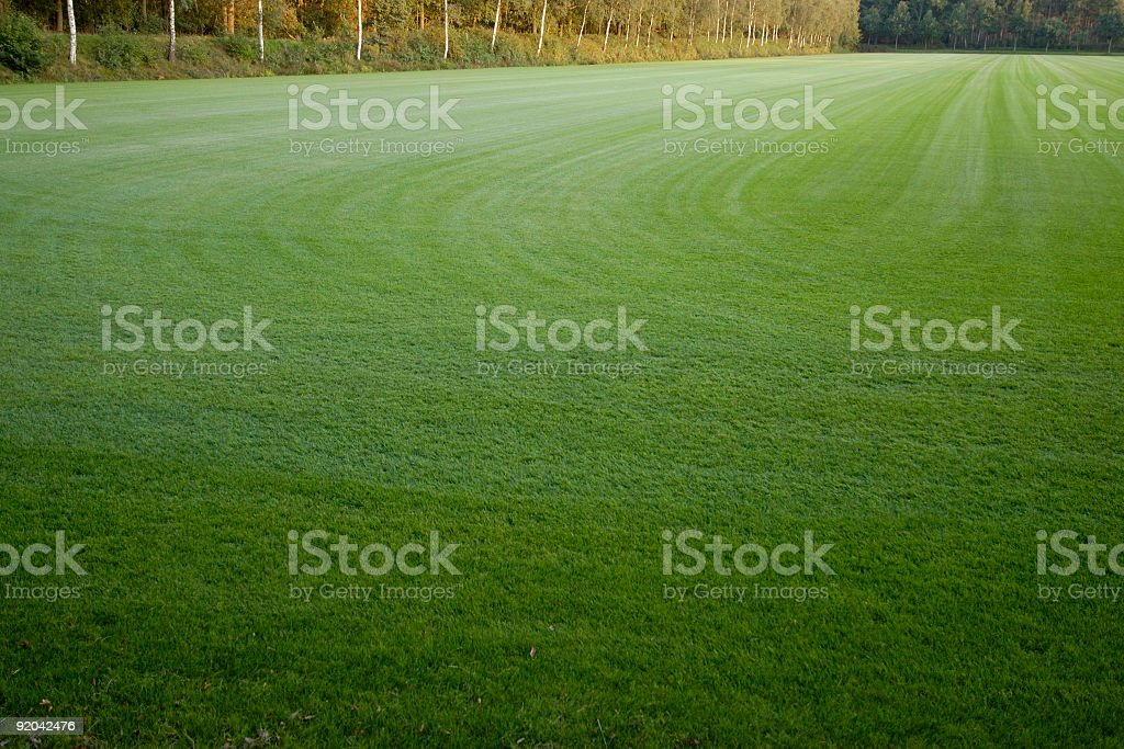 Field of grass royalty-free stock photo
