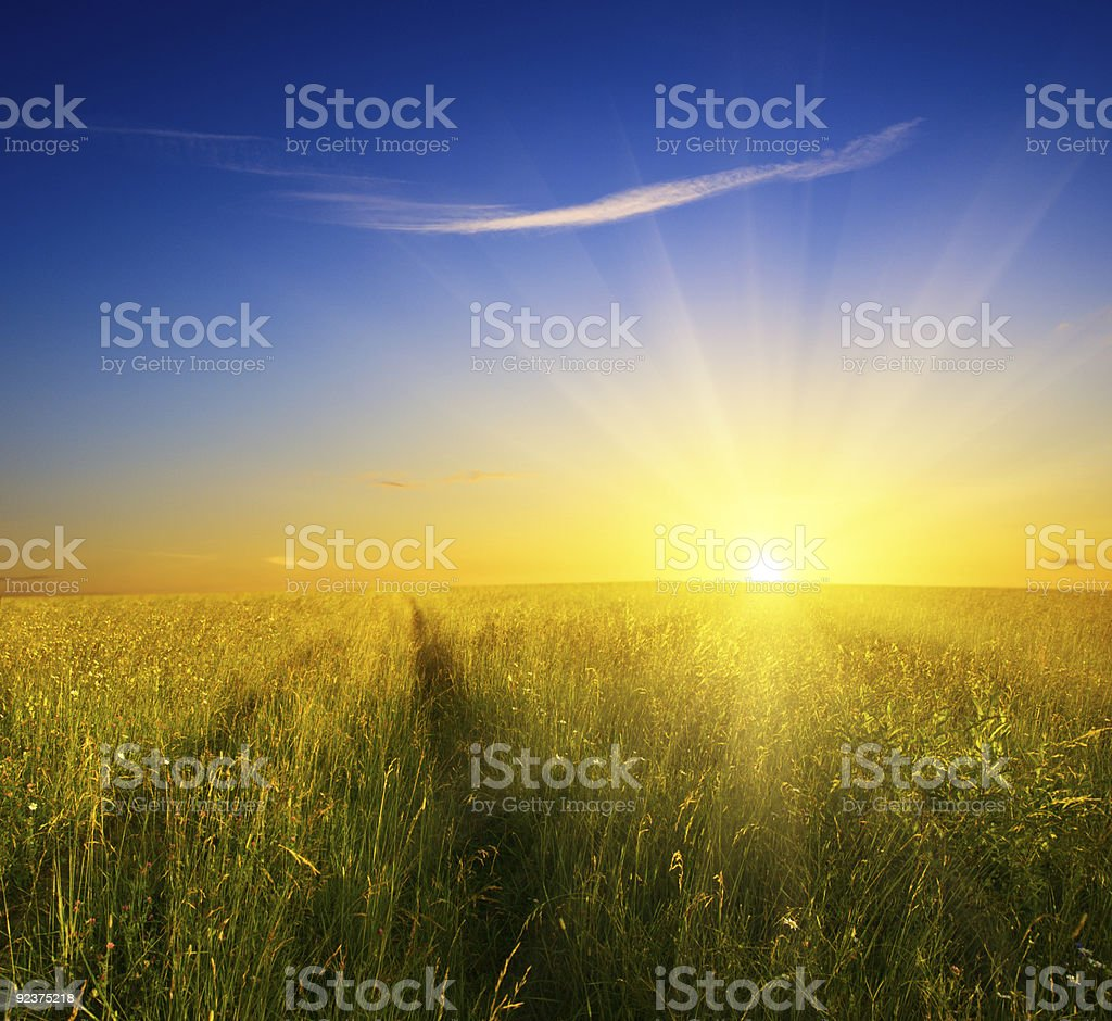 Field of grass with blue sky and a bright sunset  royalty-free stock photo