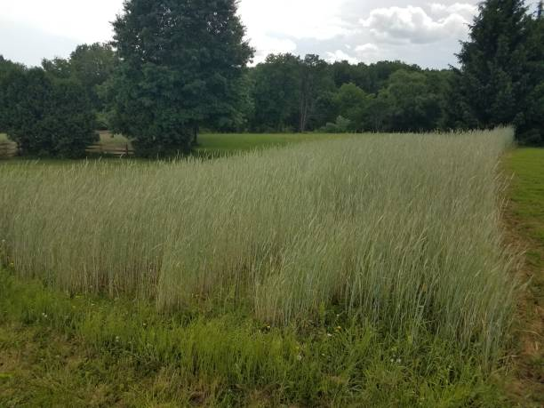 field of green and brown grass stock photo