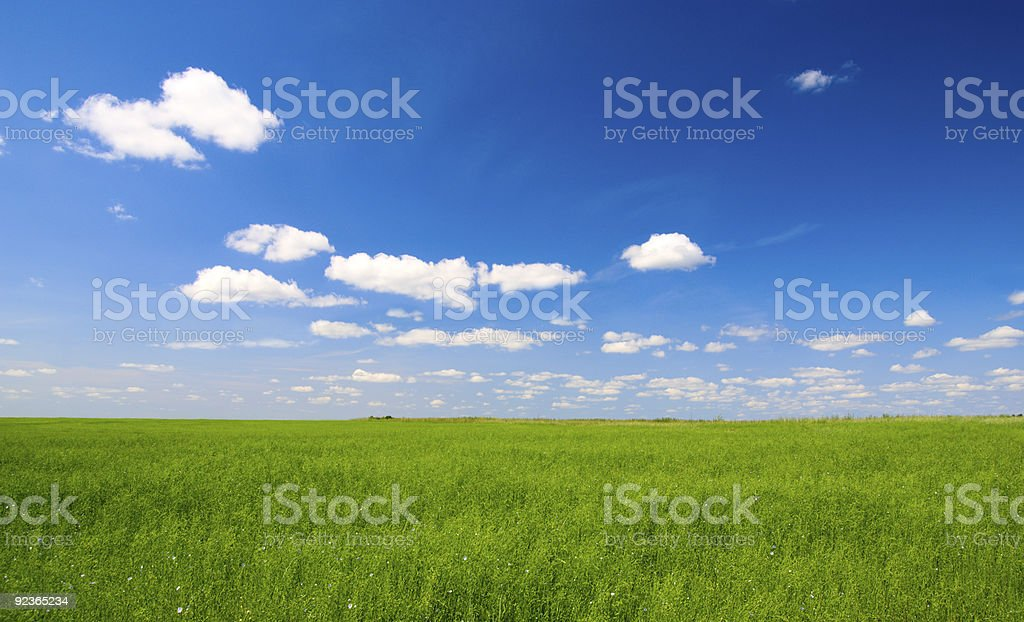 field of green flax and sun royalty-free stock photo