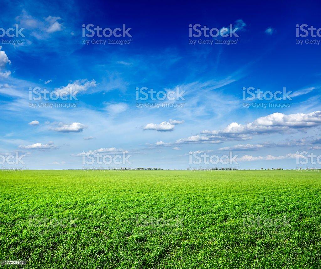 Field of green fresh grass under blue sky royalty-free stock photo