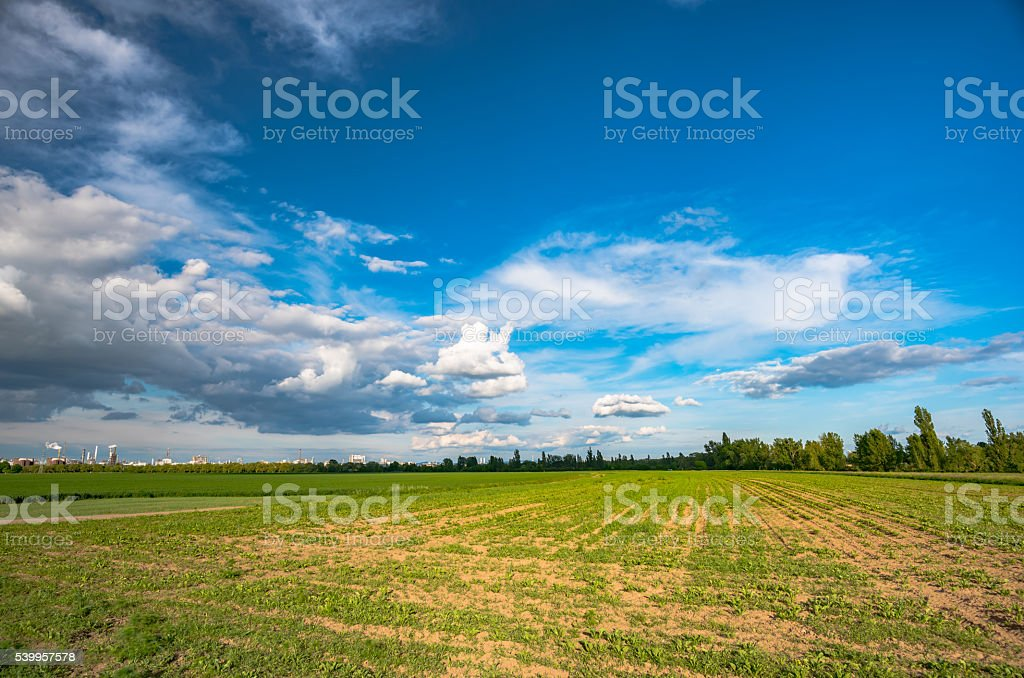 field of green fresh salad and idustrial background stock photo