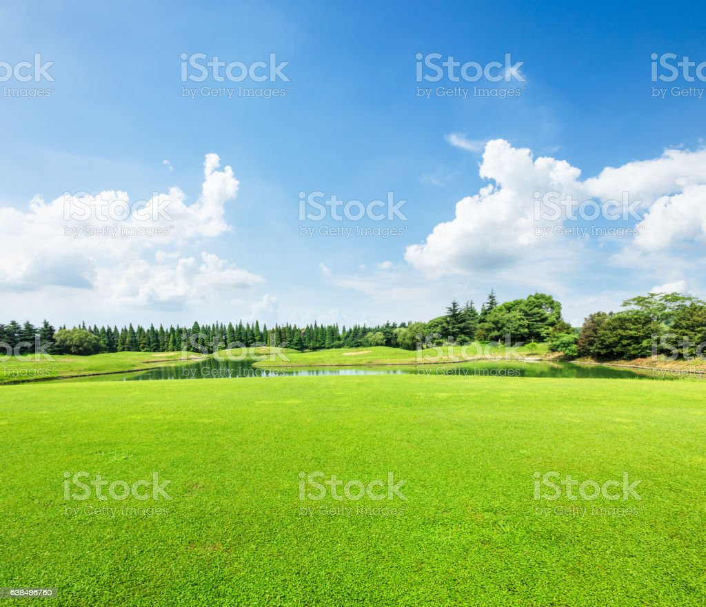 field of green grass and blue sky in summer day stock photo