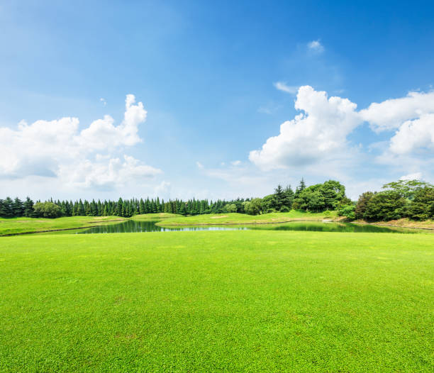 field of green grass and blue sky in summer day - foto stock