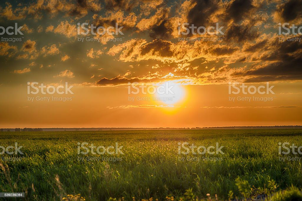 Field of green grass and sunset with stormy clouds royalty-free stock photo