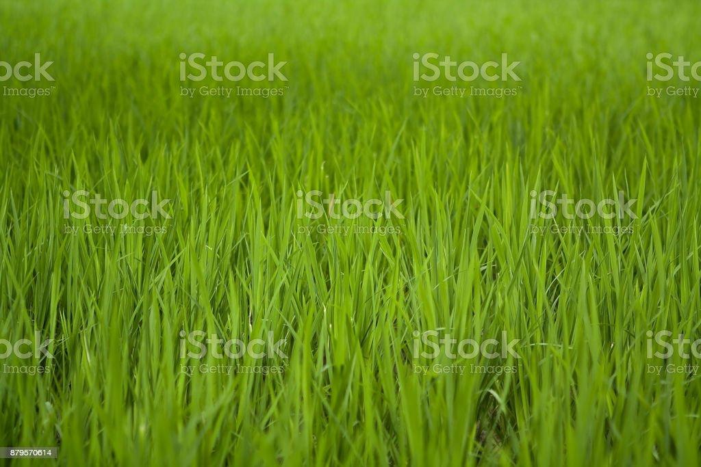 Field of green grass stock photo