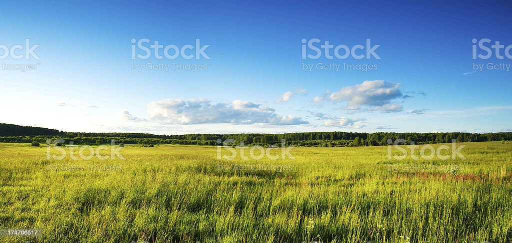 Field of high grass over blue sky royalty-free stock photo