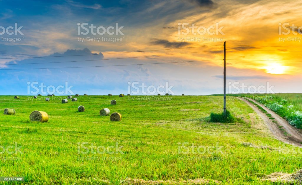 Field of mown grass stock photo