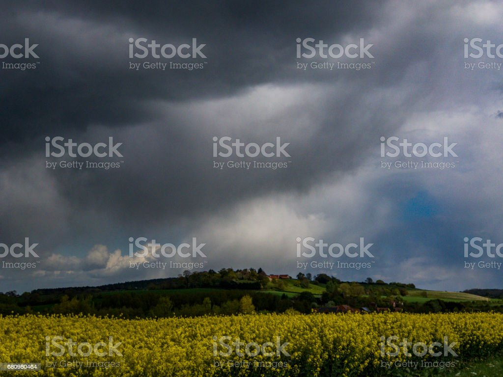 field of oil seed rape with stormy sky behind royalty-free stock photo
