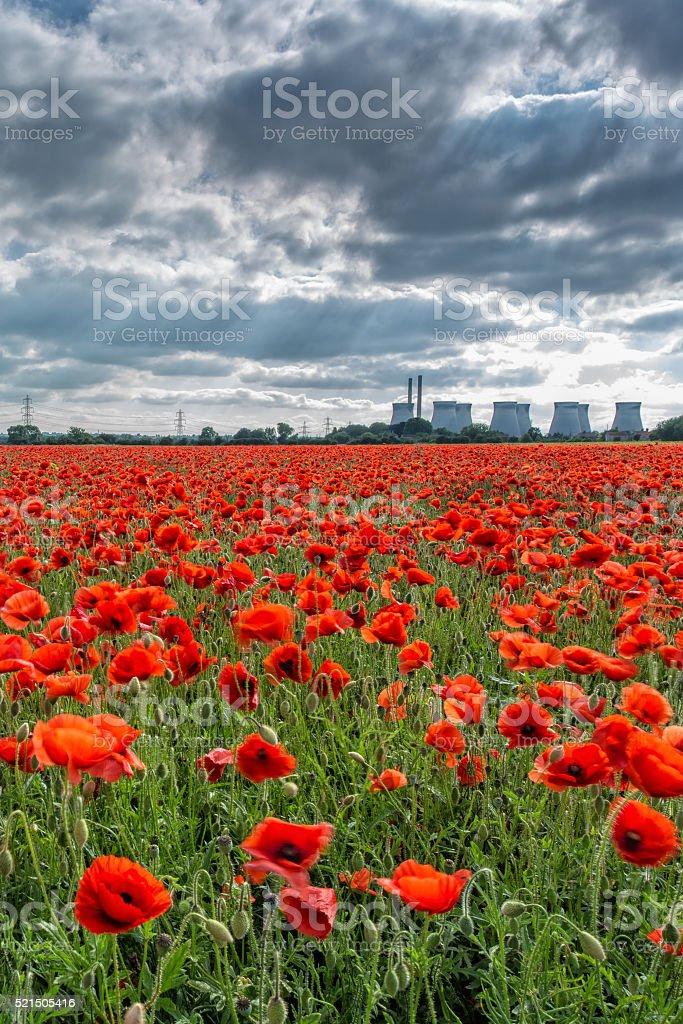 Field of Poppies at Ferrybridge power station, UK stock photo