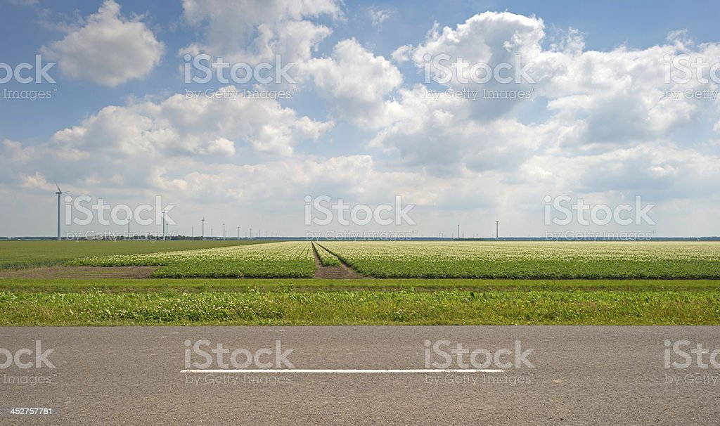 A field of potatoes growing in a field with a road  stock photo