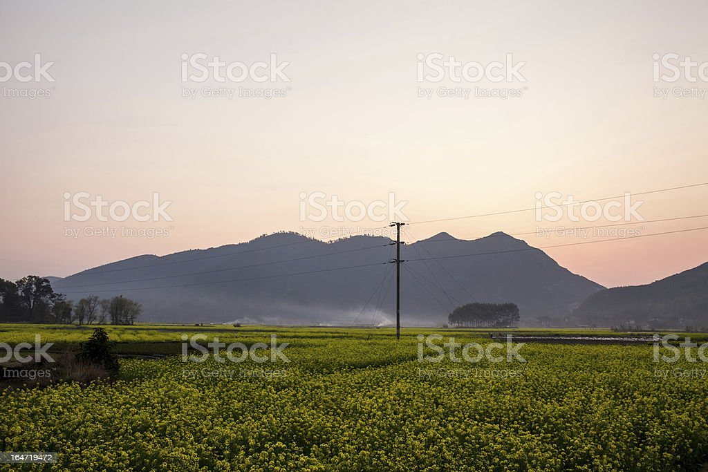 Field of rape flowers,spring morning scene ,China royalty-free stock photo