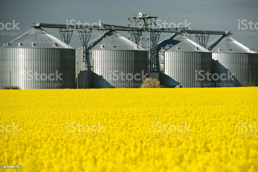 Field of Rapeseed blossoming, a grain Silo behind stock photo