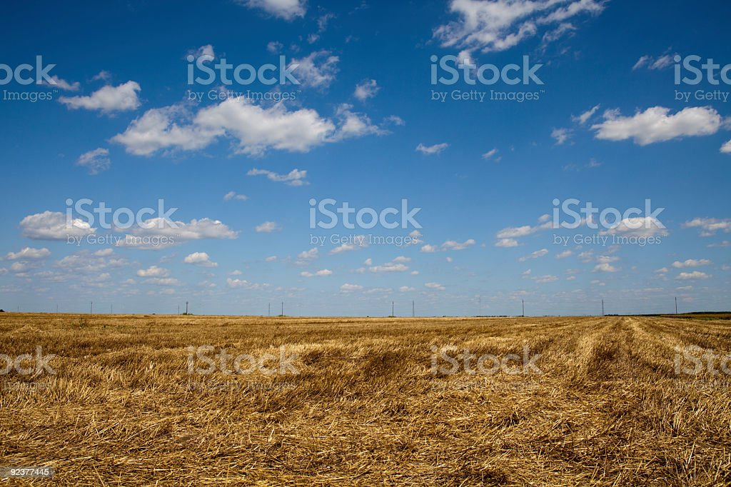 Field of reaped wheat royalty-free stock photo