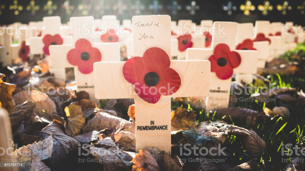 Field of Remembrance Day Crosses and Poppies stock photo