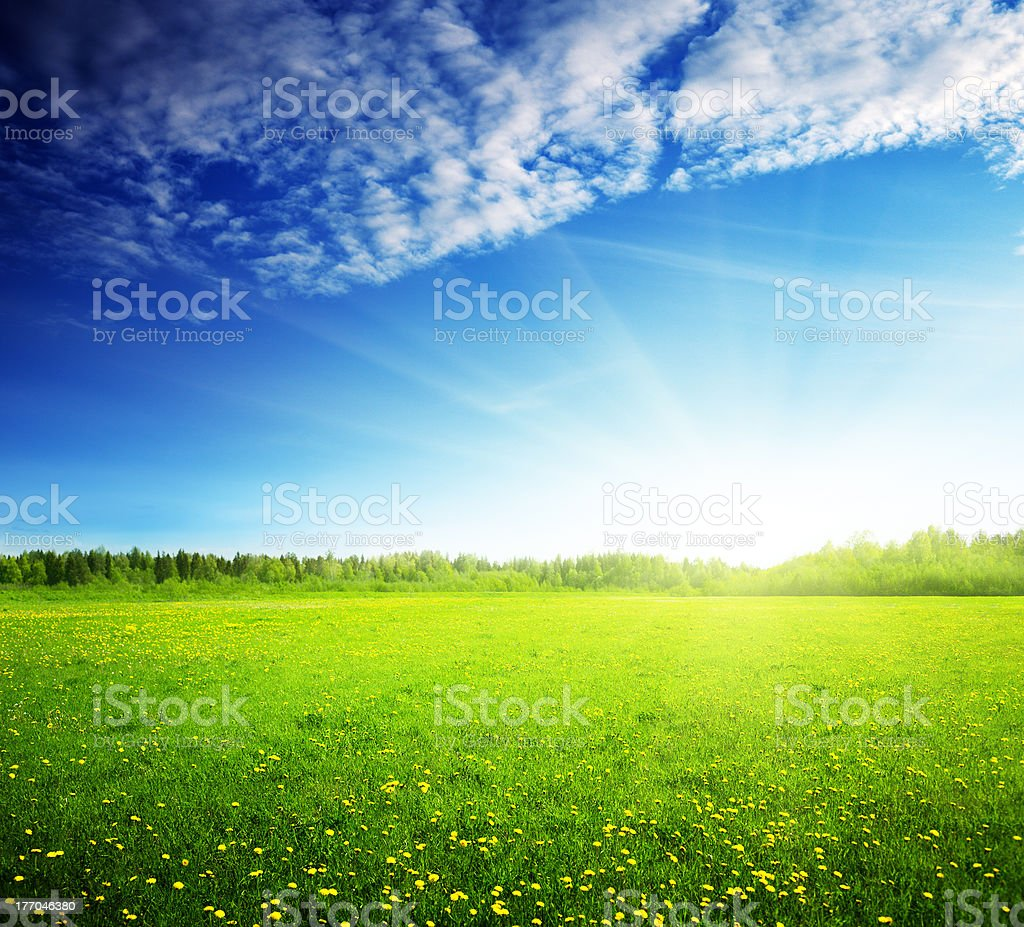 field of spring flowers and perfect sky stock photo