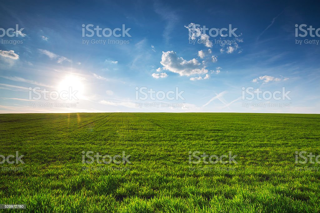 Field of spring fresh green grass stock photo