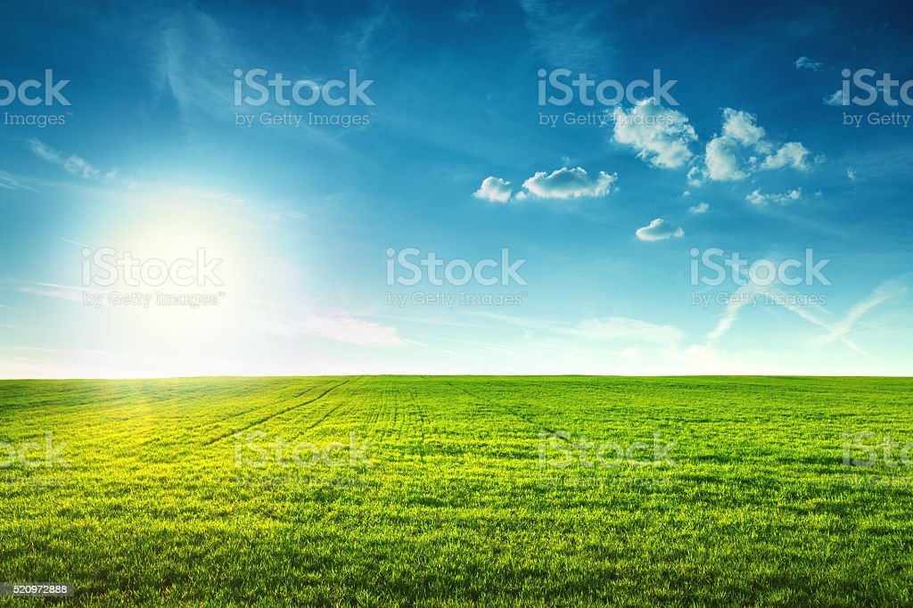 Field of spring fresh green grass stock photo