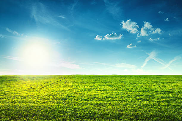 field of spring fresh green grass - field stock photos and pictures