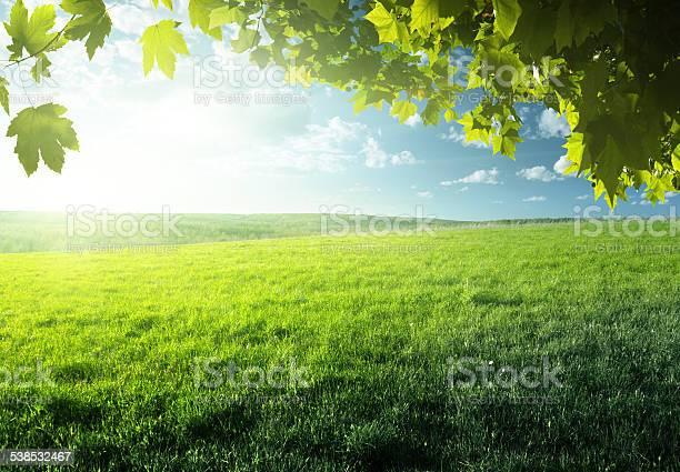 Field of spring grass and forest picture id538532467?b=1&k=6&m=538532467&s=612x612&h=ulxynlxryq7wvyybvhb2vbtji294mjlsjxwonmrfmle=